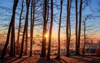 Bild für Kategorie Wälder und Bäume